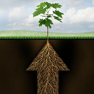 groeistrategie